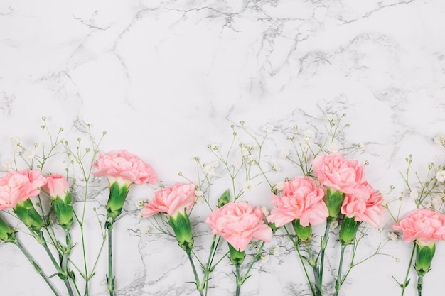 Oeillets roses et fleurs de gypsophile sur fond texturé en marbre Photo gratuit