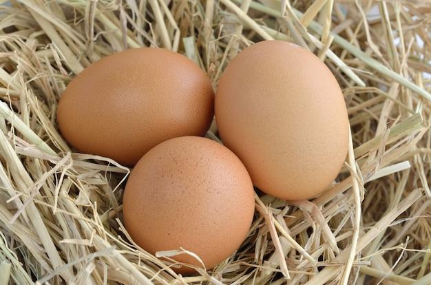 Oeufs au nid à la ferme de poulet Photo Premium