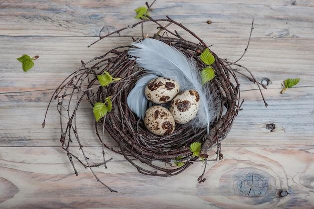 Œufs de caille dans un nid de brindilles de bouleau et de plumes bleues sur une table en bois Photo Premium