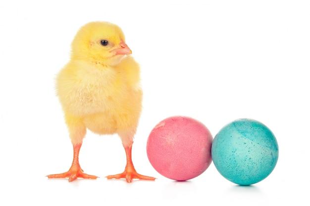 Oeufs colorés de pâques et mignon petit poulet isolé sur blanc Photo Premium