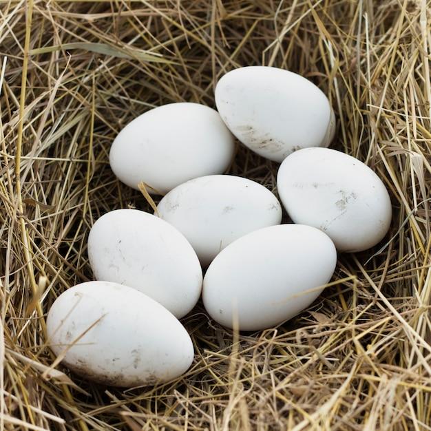 Oeufs frais biologiques à la ferme de poulets Photo gratuit
