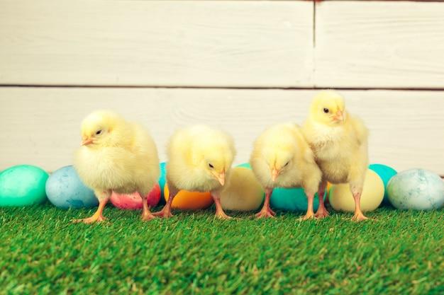 Oeufs de pâques et poulets sur l'herbe verte Photo Premium
