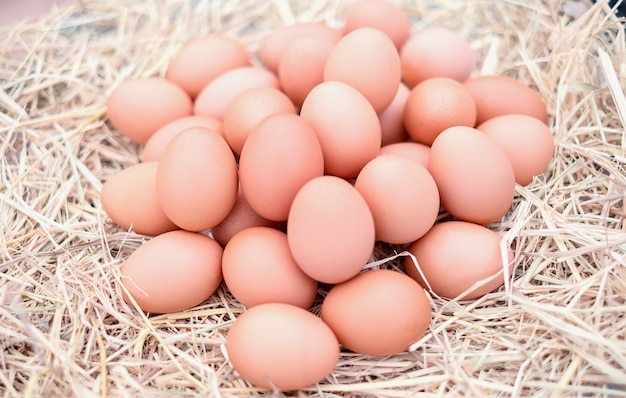 Œufs de poule de bonne qualité dans les fermes locales avec de la paille. frais, adapté à la cuisine Photo Premium