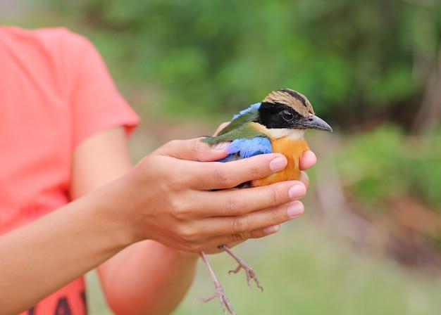 Oiseau abandonner, oiseau dans les mains de dame Photo Premium