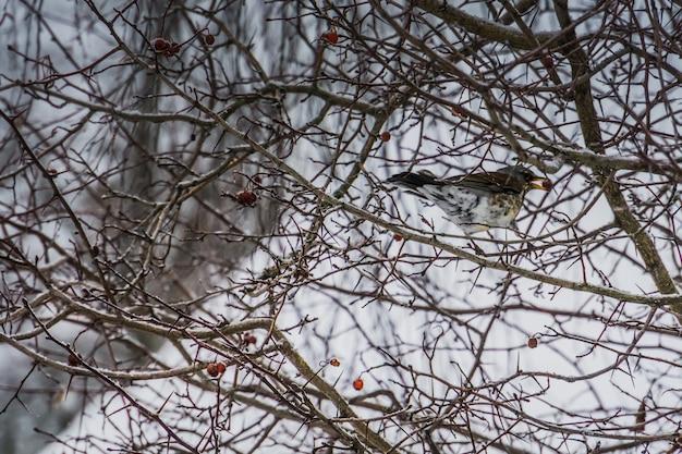 Oiseau affamé sur un arbre Photo Premium