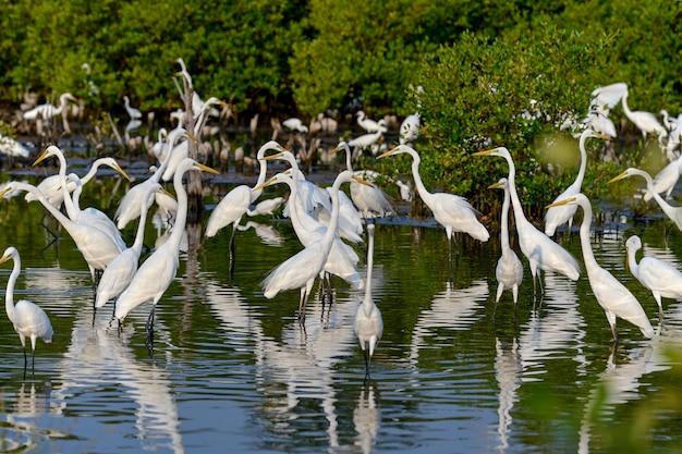 Oiseau Aigrette Dans La Source D'eau Naturelle Photo Premium