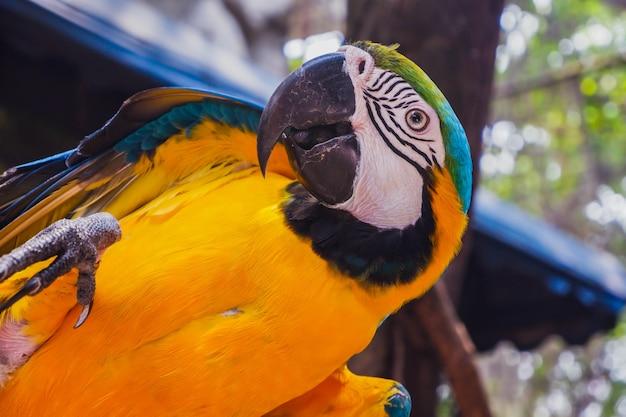 Oiseau ara Photo Premium