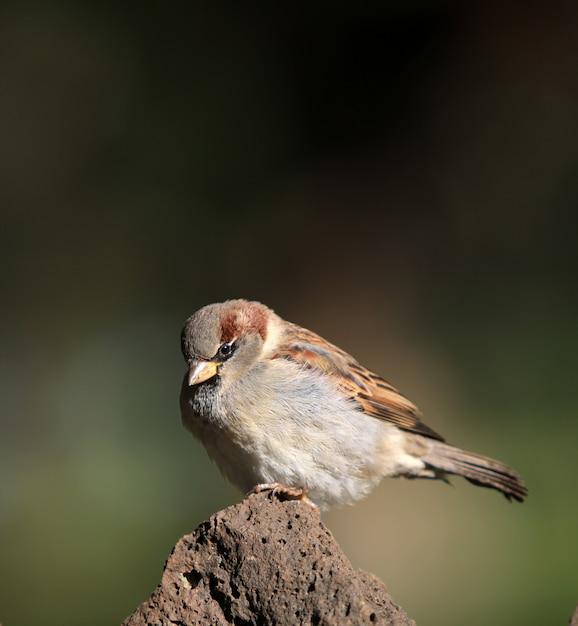 Oiseau Assis Sur Un Rocher Avec Un Arrière-plan Flou Photo gratuit
