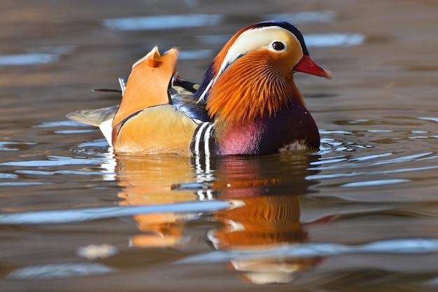 Oiseau Close Up Piscine Photo gratuit