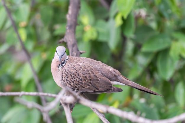 Oiseau (colombe, pigeon ou désambiguïsation) dans une nature Photo Premium
