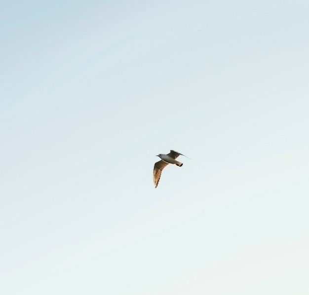 Oiseau à Faible Angle Dans Le Ciel Photo gratuit