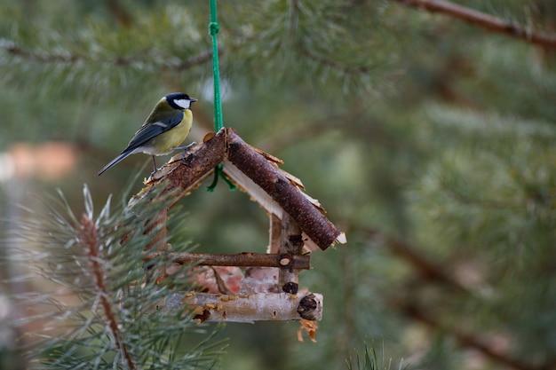 L'oiseau Mange De La Mangeoire. L'oiseau Mange De La Graisse En Hiver. L'oiseau Mange Du Pain Blanc. Photo Premium