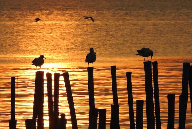 Oiseau mouette silhouette au coucher du soleil en thaïlande Photo Premium