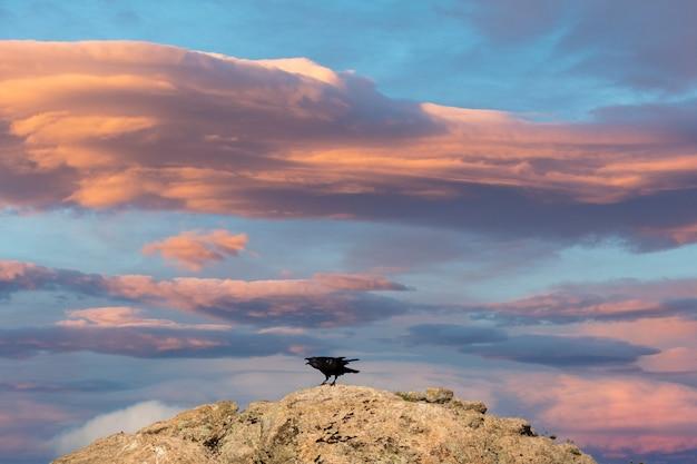 Oiseau Noir Couinant Avec Un Ciel Magnifique Sur Le Fond Photo Premium