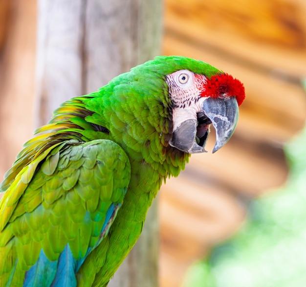 Oiseau perroquet Photo Premium