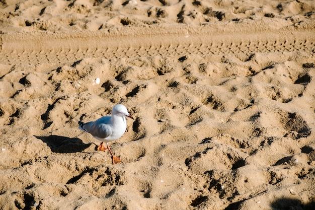 Oiseau et sable Photo gratuit