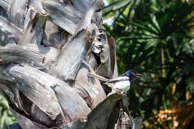 L'oiseau tête bleue corps blanc sur un arbre. Photo Premium
