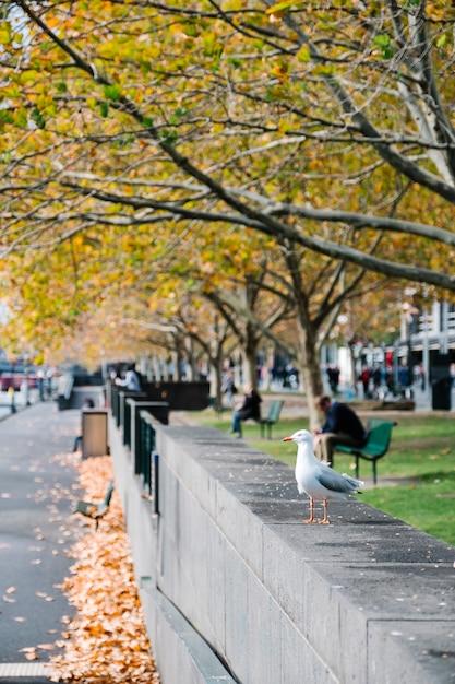 Oiseau en ville Photo gratuit
