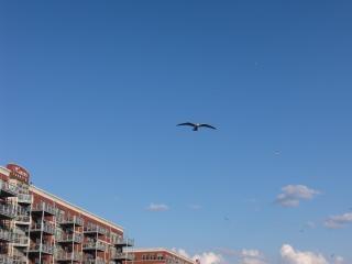 Oiseau en vol, la mouette Photo gratuit
