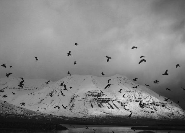 Oiseaux à la montagne en noir et blanc Photo gratuit