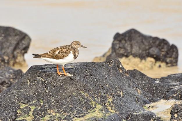 Oiseaux sur la plage des îles galapagos Photo Premium