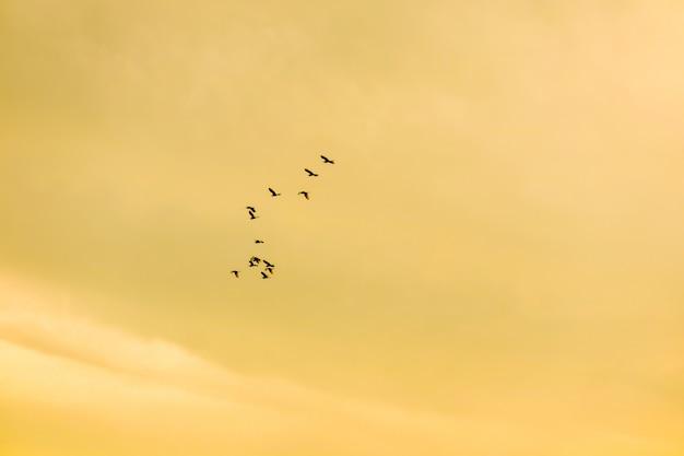 Oiseaux qui volent à la maison sur un nuage doux de ciel coucher de soleil Photo Premium
