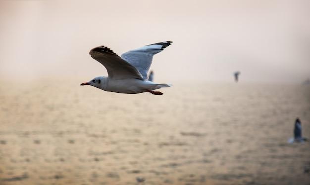 Les oiseaux restent sur le toit du temple avec ciel Photo Premium