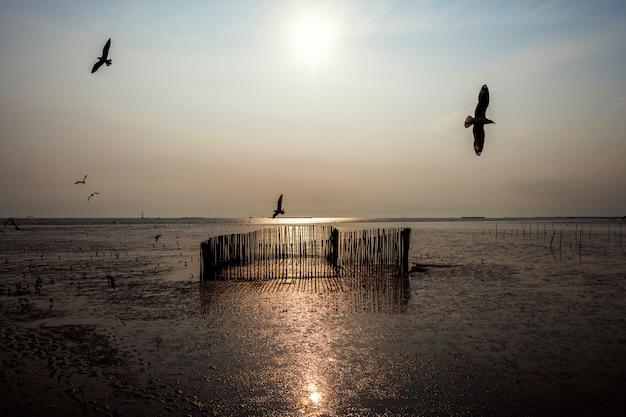 Oiseaux survolant un lac Photo gratuit
