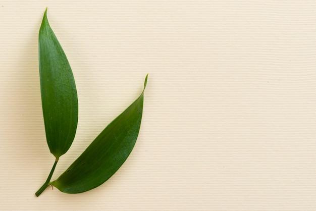 Olives feuilles sur la table avec espace de copie Photo gratuit