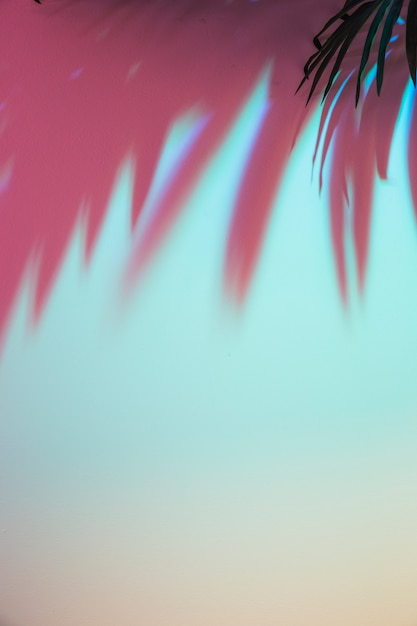 Ombre colorée des feuilles sur fond coloré Photo gratuit