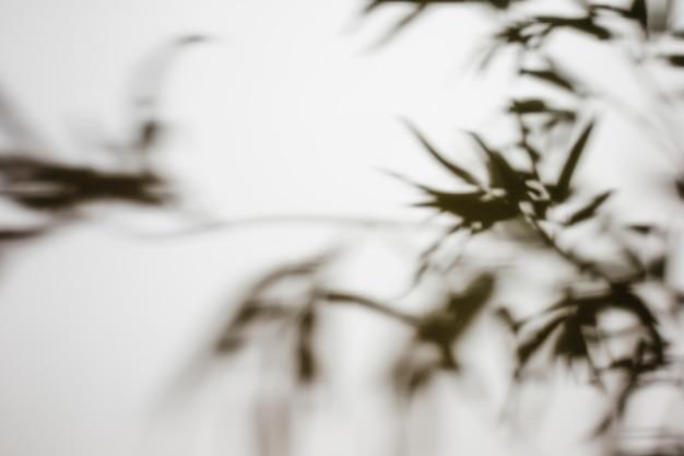 Ombre défocalisé laisse sur fond blanc Photo gratuit