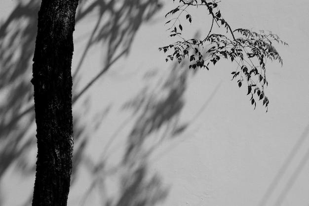 Ombre d'une feuille et d'une branche sur le mur de béton blanc - monochrome Photo Premium