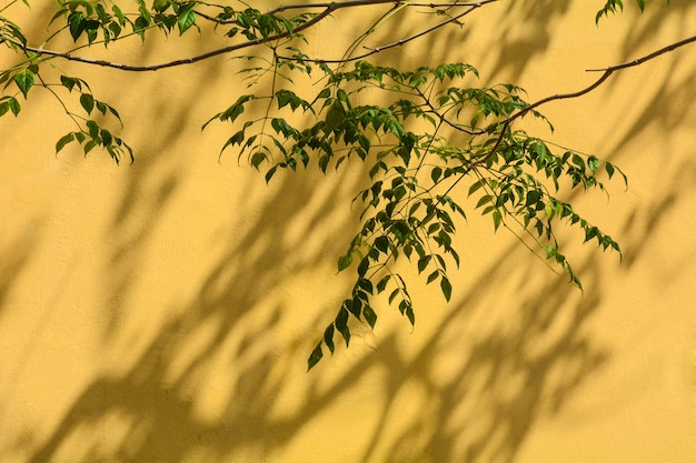Ombre d'une feuille et d'une branche sur le mur de béton jaune Photo Premium