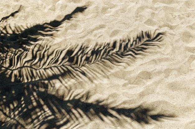 Ombre de feuille de palmier sur le sable Photo Premium