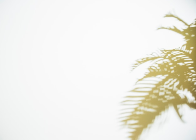 Ombre de feuilles sur fond blanc Photo gratuit