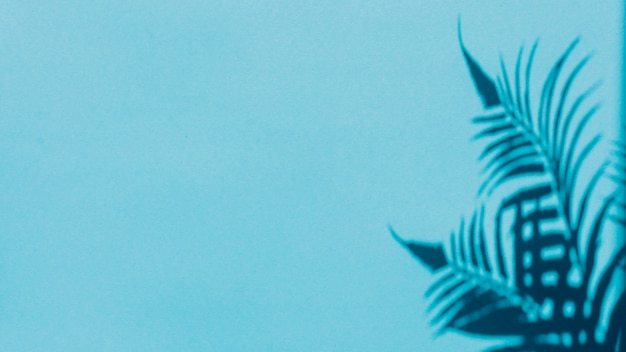 Ombre des feuilles sur fond coloré Photo gratuit