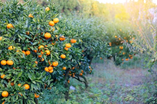 Orange - oranger orange park Photo Premium