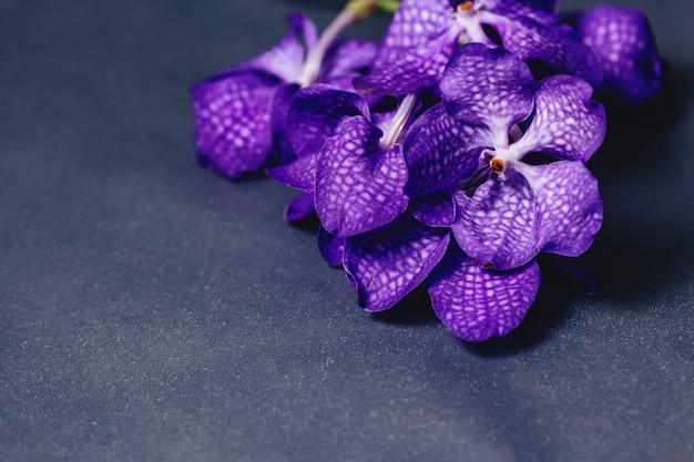 Orchidée bleue sur fond gris simple Photo Premium
