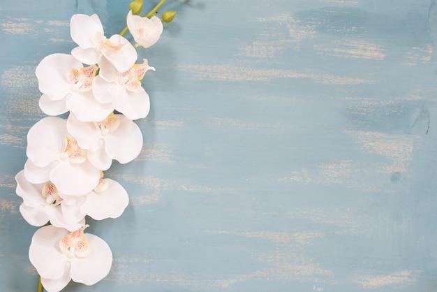 Orchidée avec espace copie Photo gratuit