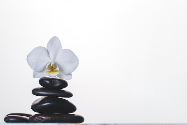 Orchidée sur des pierres volcaniques sur fond blanc Photo gratuit