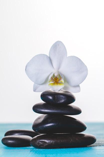Orchidée sur des pierres volcaniques Photo gratuit