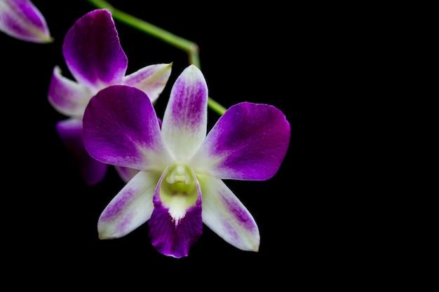 Les orchidées dans le jardin ont un fond noir. Photo Premium