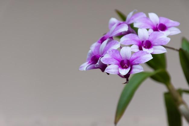 Orchidées en fleurs Photo Premium