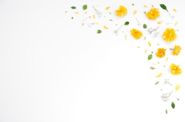 Ornements Floraux Photo gratuit