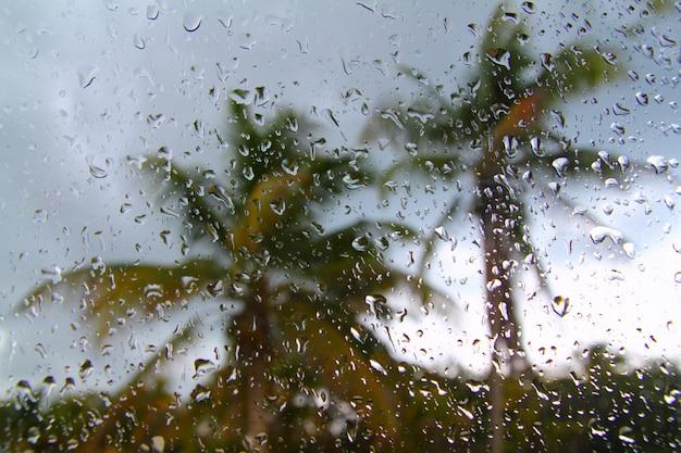 Ouragan, tempête tropicale, palmiers, depuis, voiture Photo Premium