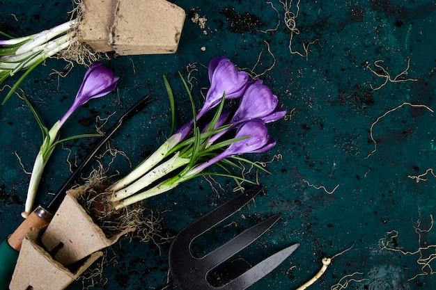 Outils de jardinage, pots de tourbe, fleur de crocus. printemps Photo Premium