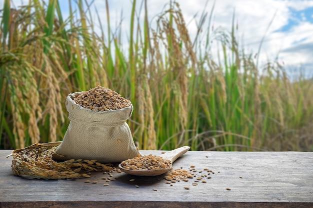 Paddy dans le sac et la cuillère en bois avec le fond de champ de riz Photo Premium