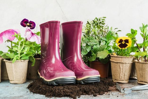 Paire de bottes en caoutchouc pourpres sur le sol avec des plantes en pot de tourbe Photo gratuit