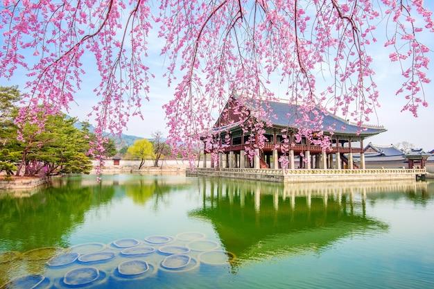 Palais Gyeongbokgung Avec Fleur De Cerisier Au Printemps, Corée Du Sud. Photo gratuit