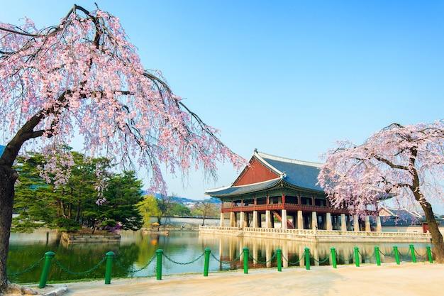 Palais Gyeongbokgung Avec Fleur De Cerisier Au Printemps, Corée. Photo gratuit